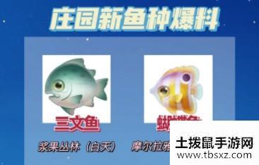 摩尔庄园手游三文鱼在哪钓?三文鱼位置介绍!